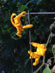 scorpion_rhino_garden_2014-08-27.png